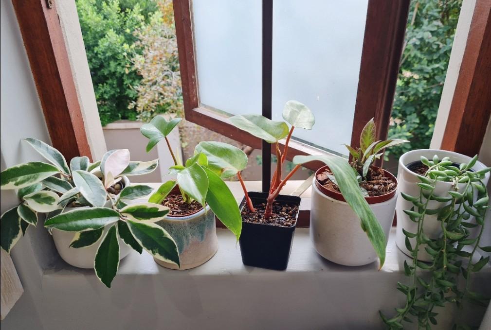 Corine.leafy's