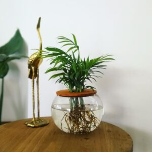 10cm Fishbowl with Love Palm