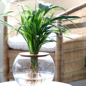 20cm Fishbowl with Bamboo