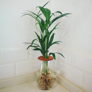 20cm barrel vase with Bamboo