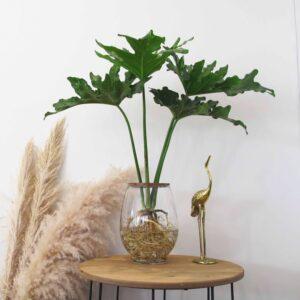 24cm Barrel Vase with Philodendron Selloum